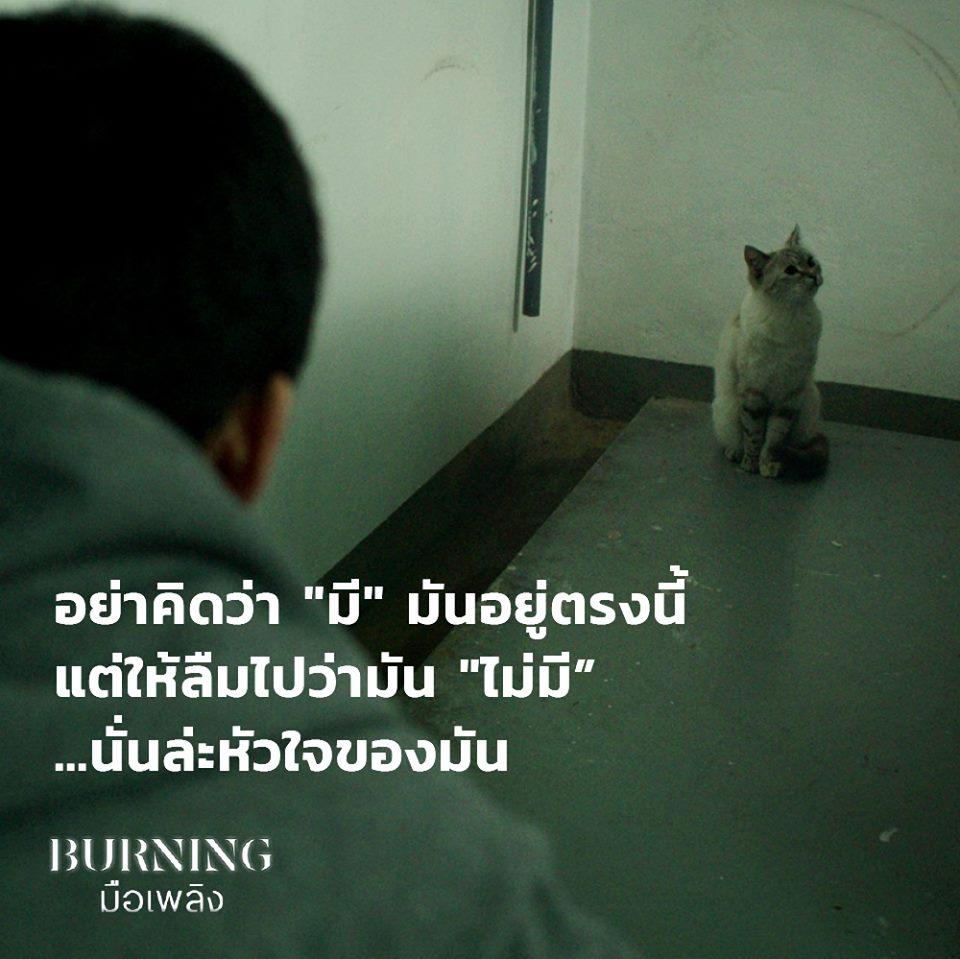 แมวบอยล์